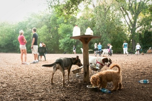 dogs and people at a dog park